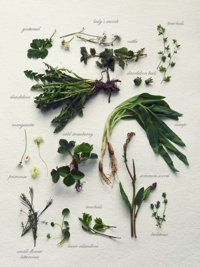 Herbier plantes sauvages comestibles